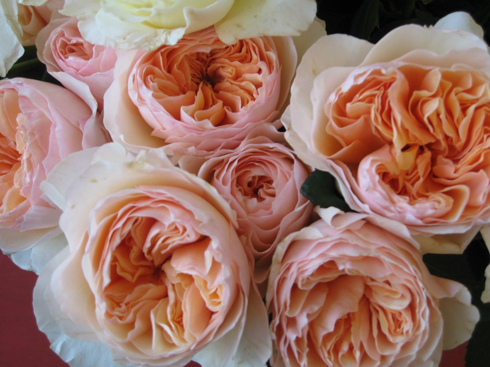 une  fleur  à trouver  - ajonc - 7 juin Bravo Martine A97b3ddcf231912345efe7ebb57381be