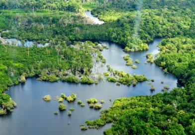 Amazing Facts of Amazon Forest
