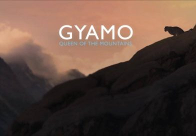 GYAMO –QUEEN OF MOUNTAINS!
