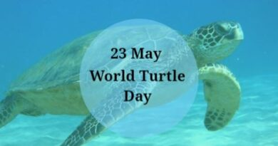 World Turtle Day 2020