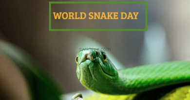 World Snake Day 16th July 2020- 10 Mind-blowing Facts