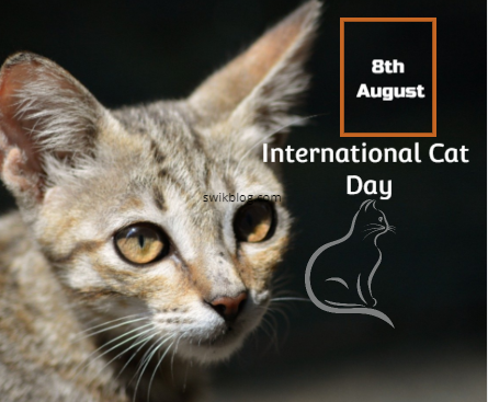 International Cat Day 8th August 2020