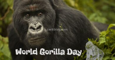 World Gorilla Day 24th September 2020
